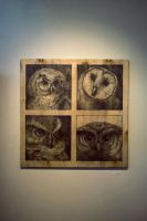 """look"" - owls by aauce"