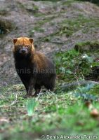 Bush Dog by torreoso