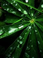 Raindrops. by Ritariperhonen