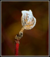 Frosted Leaf by xedgerx