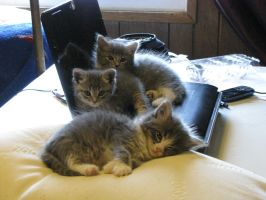 They took over my laptop again... by NanasFreak