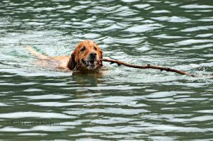 fetch by kayaksailor