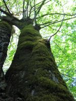 Nature_0033 by DRE-stock