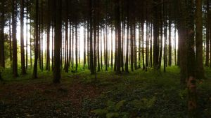 Forest 11c by SelvaStock