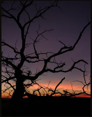 Tree on Nebo at Sunset Point by dahni