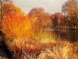 Hyde Park London by GraceDoragon