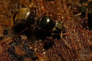 on dead Wood  -  The Ant by webcruiser