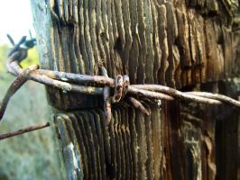 Old Barbed Wire by IcejCat