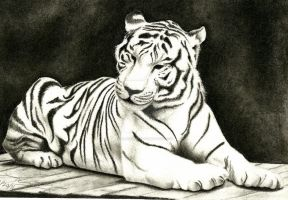 Charcoal Tiger by feliciaruiyi