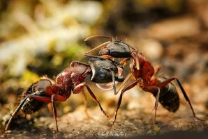 Trophallaxis Drop by MissFlykt