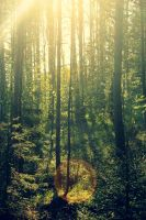 forest by Rafaelie