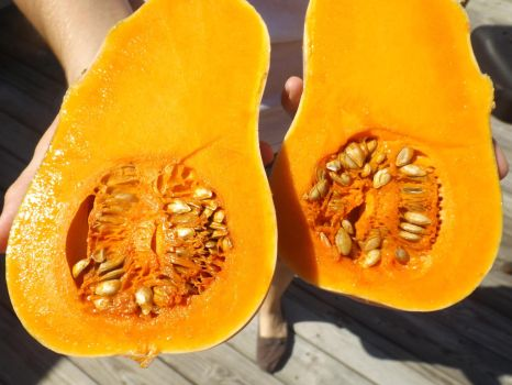 Butternut Squash Harvest by 4TheLoveOfNature