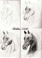 How I draw a horses head by Stormsen