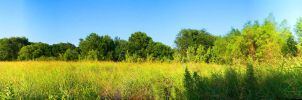 Panorama-The field by ZoeMariePaige