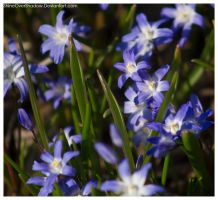 Flowers 054 by ShineOverShadow