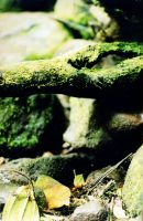 Mossy Branch1 by Armathor-Stock