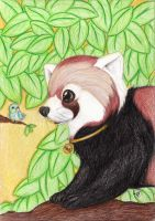 Red panda by GG-lover