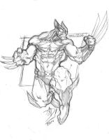 Wolverine Old Costume Sketch by darnof
