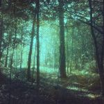 Forest 54 by Amalus