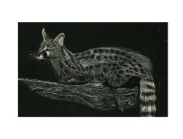 wild cat by penguinluv4ever