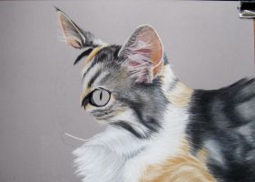 Tita. Cat in pastel by mo62