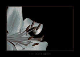 The Silver Lilium by kharax