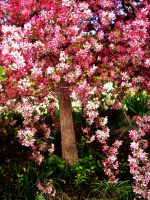 Pink Tree by VirginiaRoundy