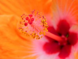 Orange Invitation by dmguthery
