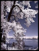 River Tree IR by Photo-Cap