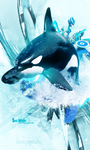 Killer Whale by Lucarity