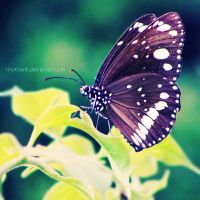 Butterfly by nhuthanh