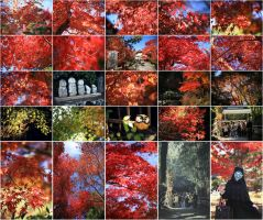 Autumn of Arashiyama by kindaseiha