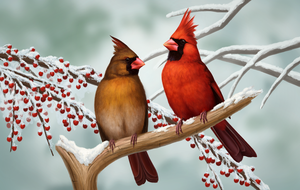 Northern Cardinal pair by Nachiii