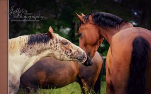 FRIENDLY TOUCH by JullelinPhotography