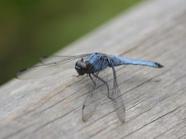 Dragonfly0024 by osam-devet