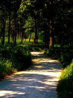Summer Pathway 1 by TropicalxLondon