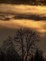 gold winter by narare