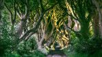 Peaceful Old Trees by Lilyas