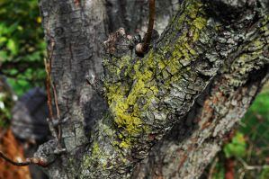 Tree moss by sibercat