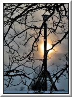 Through branches to the Tower by Yancis