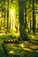 Forest - After Effects raytracing test by hmcindie