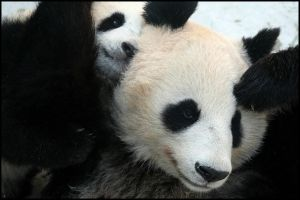 Fu Long loves his Mummy by AF--Photography