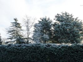 more frost covered trees by thebluemaiden