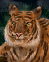 Siberian Tiger by neecolette