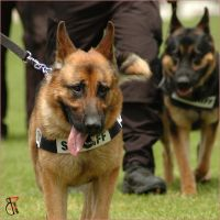 police dogs 1 by kashadog