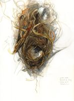 Wren Nest by amwah