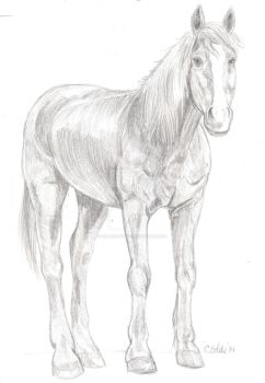 Horse drawing for poster by Carrietivity