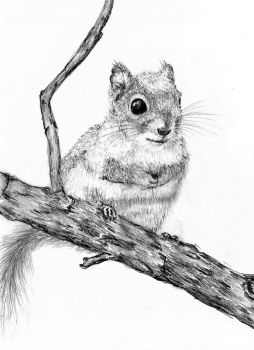 Lil' Squirrel by Andrew-AR