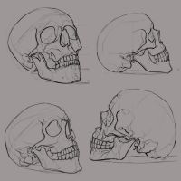 skull_sketches_1 by ksenolog