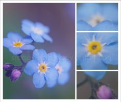 . Forget Me Not . by stacey-woo-x